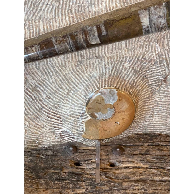 15th Century & Earlier 15th Century & Earlier Fossil Slab With Ammonites For Sale - Image 5 of 9