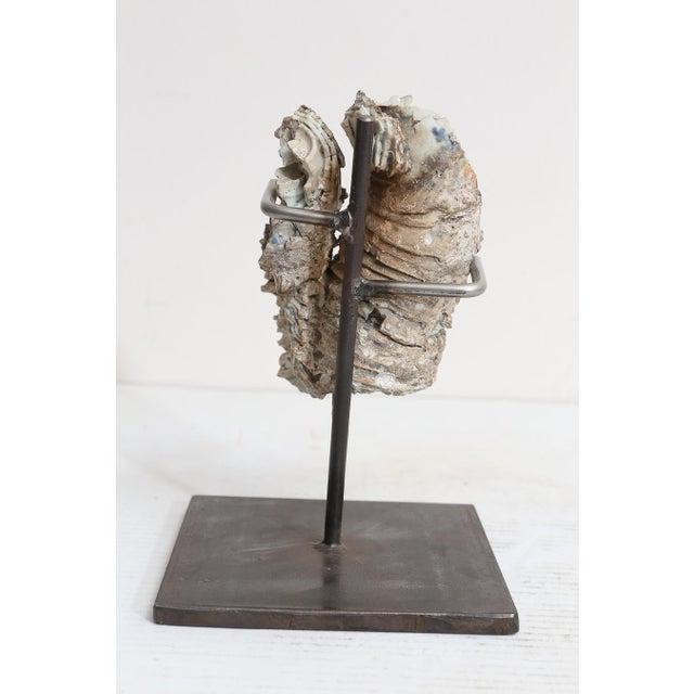 Ceramic 18th Century Cau Mau Shipwreck Porcelain Clump For Sale - Image 7 of 8
