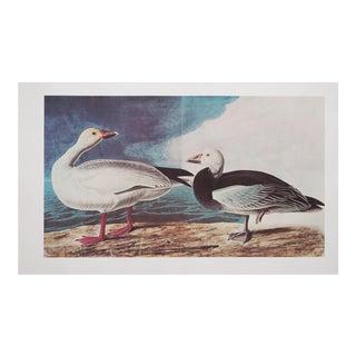 XL Vintage Lithograph of Snow Goose