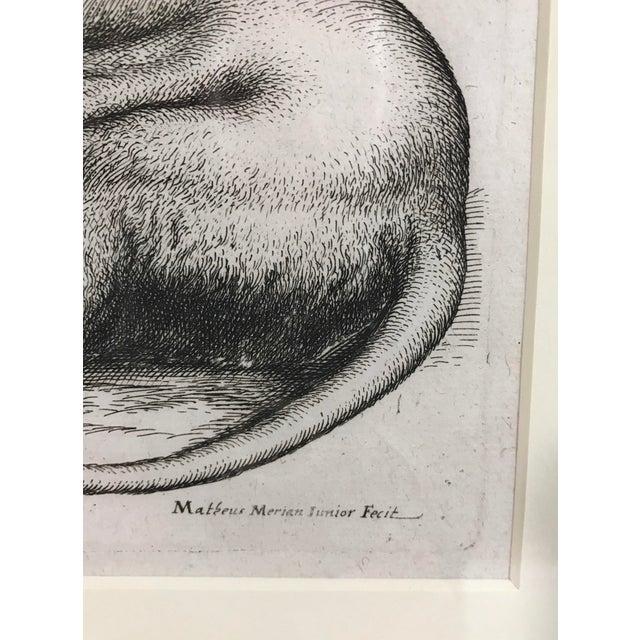 Matthäus Merian Lion Etching Print - Image 4 of 4