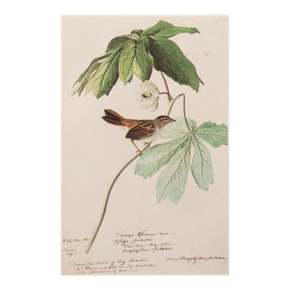 1966 Audubon Large Swamp Sparrow Lithograph
