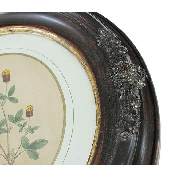Civil War-Era Botanical Prints - Set of 4 - Image 5 of 7