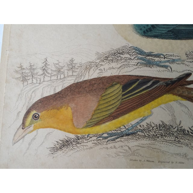 1850s Hand-Colored Bird Etchings - A Pair For Sale - Image 5 of 5