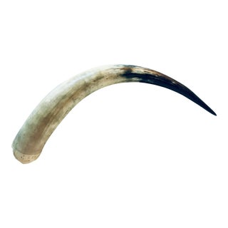 "19"" Curved Natural Longhorn Horn For Sale"