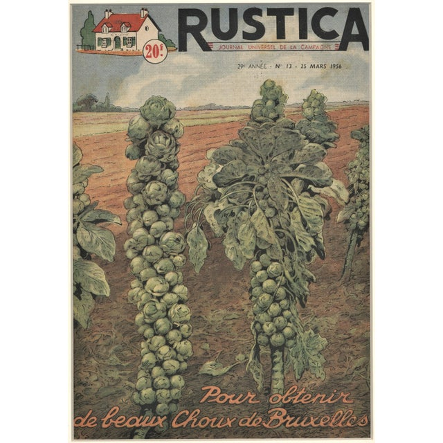 1950s Matted French Mid-Century Country Kitchen Art-Vegetables-Brussels Sprouts For Sale - Image 5 of 5