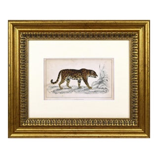 19th C. Hand Colored Engraving of a Leopard/Jaguar by Goldsmith C.1850 For Sale