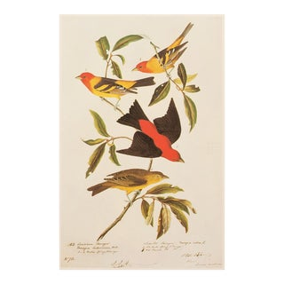 1960s Cottage Style Lithograph of a Louisiana Tanager and Scarlet Tanager by Audubon