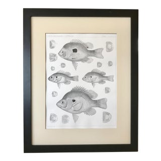 19th Century American Antique Lithograph of Fish For Sale