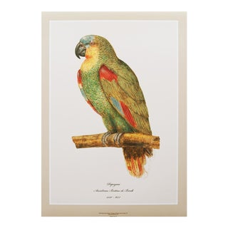 1590s Large Print of Parrot by Anselmus Boëtius De Boodt For Sale