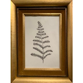 Original Black and White Framed Plant Study For Sale
