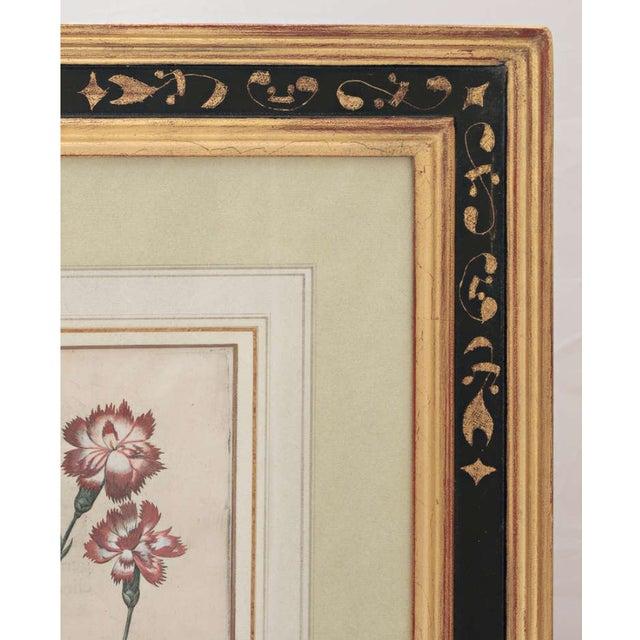 """Basil Besler """"Caryophyllus Major"""" Botanical Print For Sale In Nashville - Image 6 of 7"""