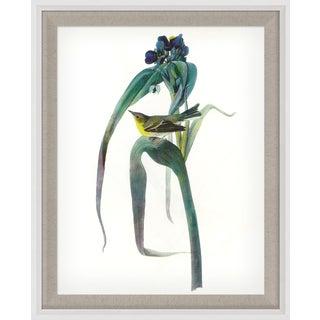Audubon 3, Framed Artwork For Sale