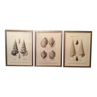 Framed Seashell Prints - Set of 3 For Sale