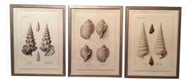 Image of Coastal Reproduction Prints