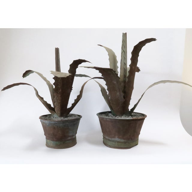 Zinc Potted Succulents - A Pair - Image 2 of 6