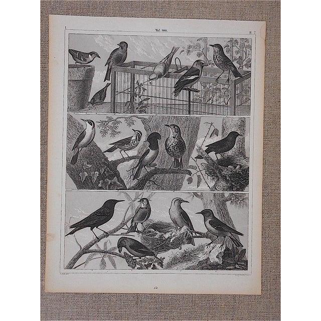 Antique Lithograph-Birds - Image 2 of 3