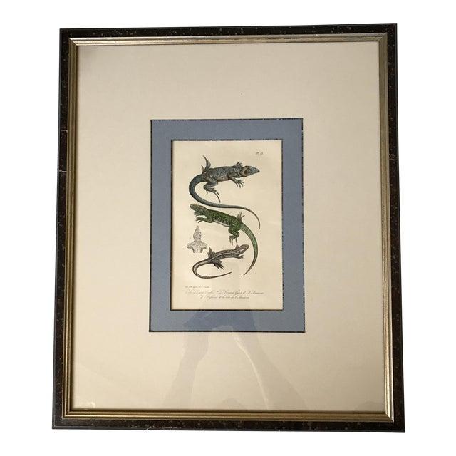 Custom Framed 1832 French Lizard Print - Image 1 of 8