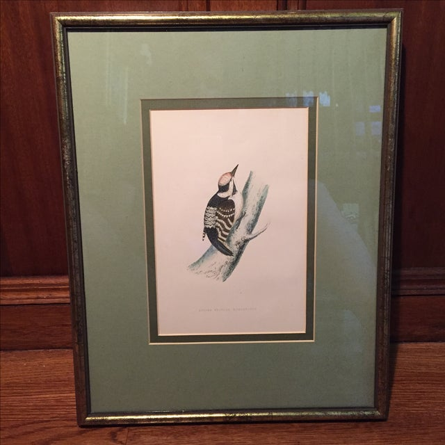 18th C. English Bird Prints in Matching Frames - Image 6 of 12