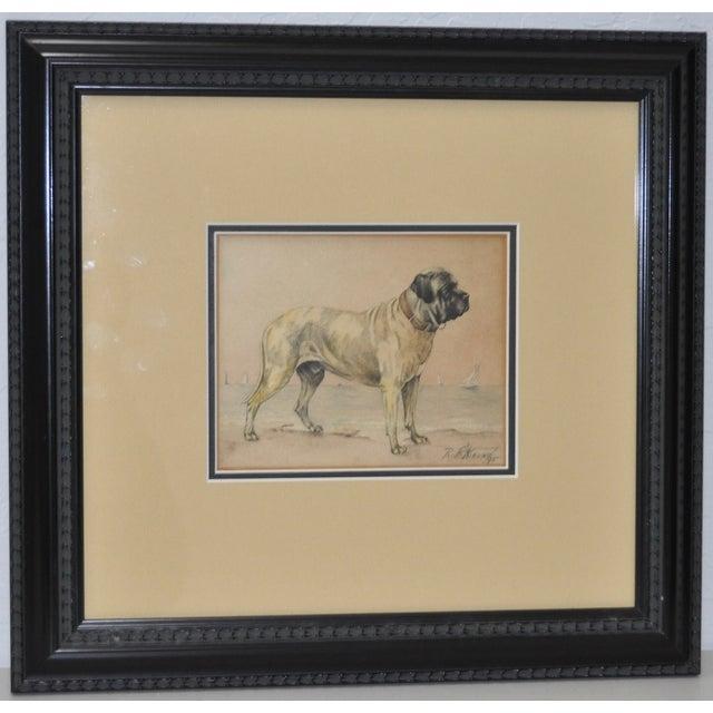 1895 Bullmastiff Watercolor by R.F. Weir - Image 2 of 5