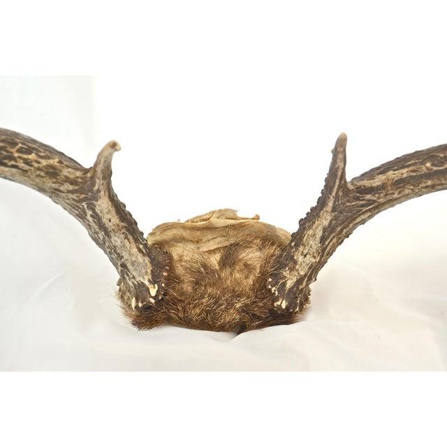 Cabin Western Deer Rack For Sale - Image 3 of 6