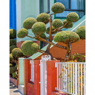 """""""Topiary With Red & White Gate"""" Contemporary Outdoor Still Life Photograph by Kelsey McClellan 24x30"""""""
