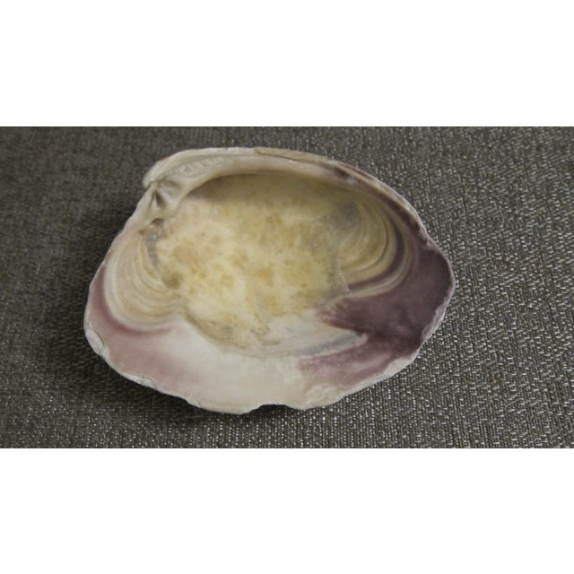 Large Natural Conch and Clam Seashells - Set of 3 - Image 10 of 10