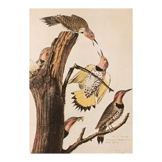 Golden-Winged Woodpecker and Yellow-Shafted Flicker by Audubon, Vintage Cottage Print For Sale