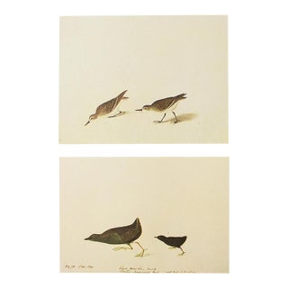 1966 Semipalmated Sandpiper & Black Rail by John James Audubon For Sale