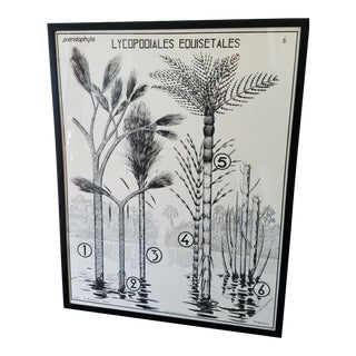 Large 1950's French Black and White Botanical Print For Sale