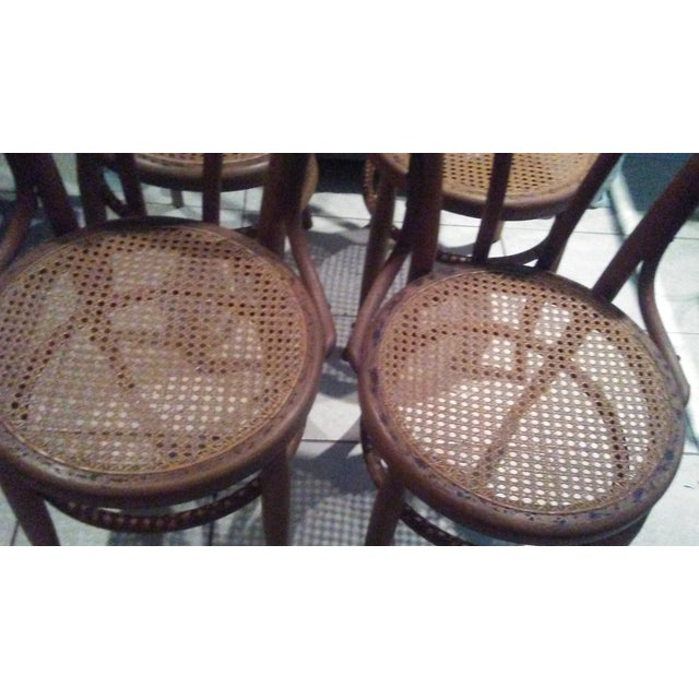 Vintage Thonet Bentwood Cane Chairs - 4 - Image 4 of 11