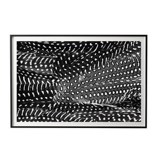 "Abstract Framed Black and White Feathers Photograph - 22"" X 32"" For Sale"