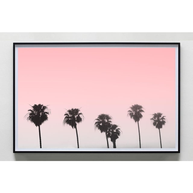 This photograph of palm trees along the foggy coast of Santa Monica against a gorgeous pink sunrise. • High Quality Giclée...