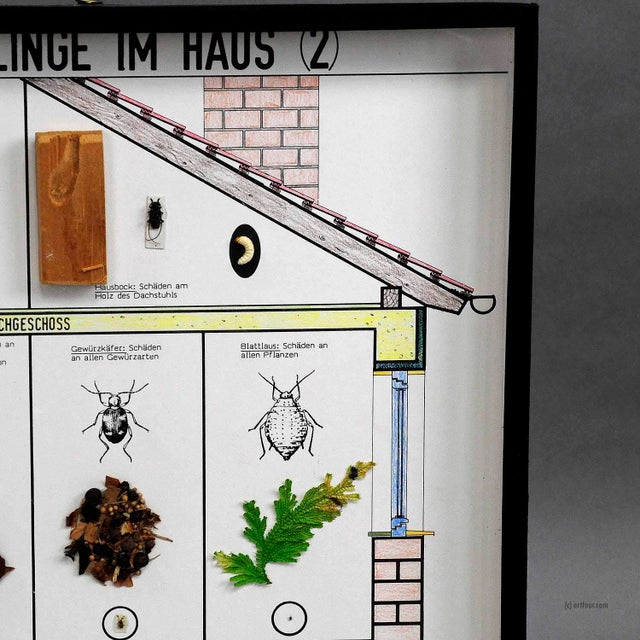 Illustration A Great Vintage School Teaching Display Of Household Pests (2) For Sale - Image 3 of 6