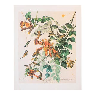 1966 Vintage Cottage Lithograph of Ruby-Throated Hummingbird by John James Audubon For Sale