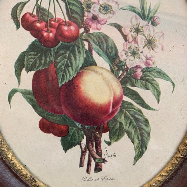 1900 - 1909 Antique Framed Botanical Prints - a Pair For Sale - Image 5 of 6