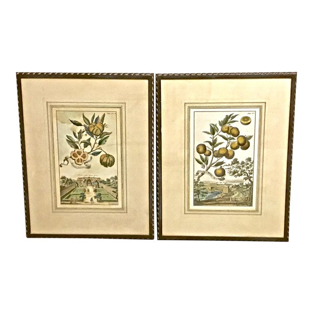 18th Century Antique Volkhammer Botanical Engravings - A Pair For Sale