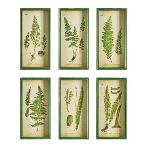 Fern Study Shadow Box Prints - Set of 6 For Sale