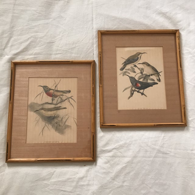 Early 20th C. Framed Avian Prints - A Pair For Sale - Image 9 of 9