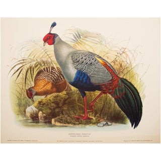 XL Original Magnificent Siamese Crested Fireback by Daniel G. Elliot, Vintage Lithogravure For Sale