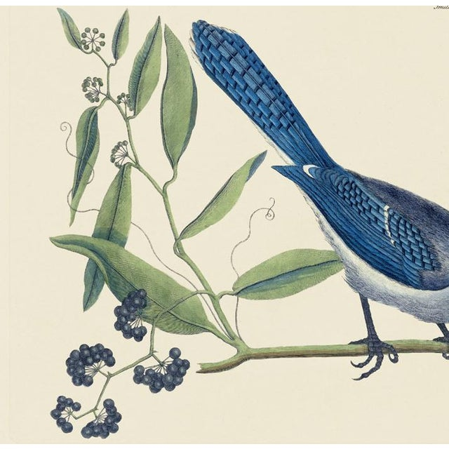 This is a special-edition print of the Crested Jay (Plate 15) from Volume I of The Natural History of Carolina, Florida,...