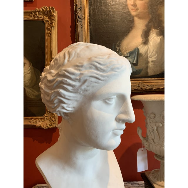 1940s Neoclassical Style Large Plaster Bust of Aphrodite For Sale - Image 5 of 11