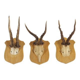 Vintage German Roe Deer Antlers - Set of 3
