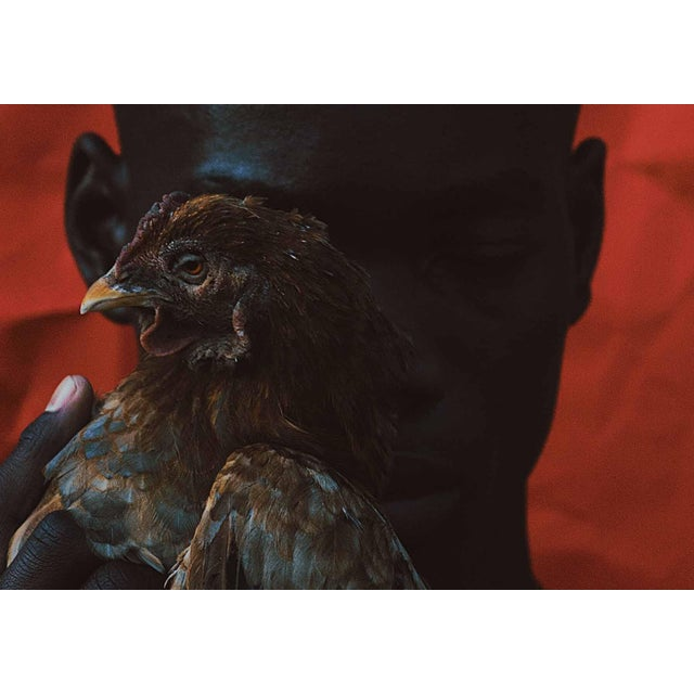 """Contemporary Photography """"Omens"""" by Douglas Condzo OMENS / Chickens in dreams can often symbolize unusual and unexpected..."""