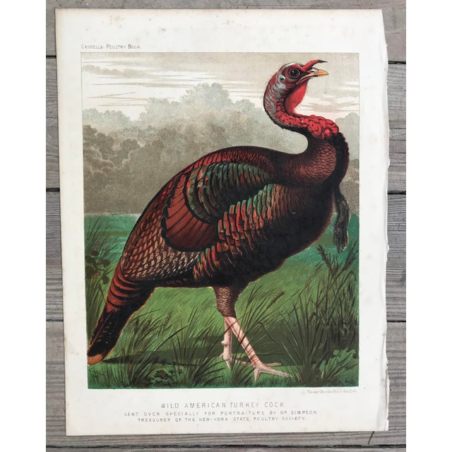 Late 19th Century Late 19th Century Antique Cassell's Poultry Book Wild American Turkey Cock Print For Sale - Image 5 of 5