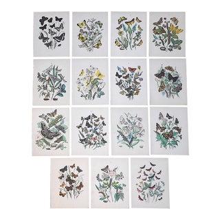 Authentic Antique 19th Century Butterflie Moths Chromolithographs - Set of 15 For Sale
