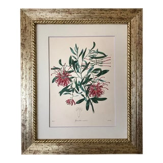 Antique Floral Botanical Colored Etching 19th Century For Sale