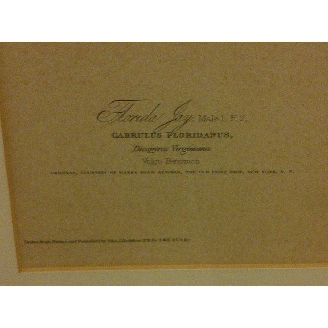 "Vintage ""Florida Jay"" Engraving Copy For Sale - Image 7 of 8"