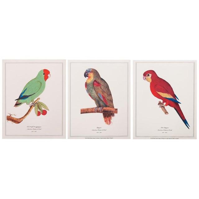 1590s Parrot Set of 3 by Anselmus De Boodt For Sale - Image 10 of 10