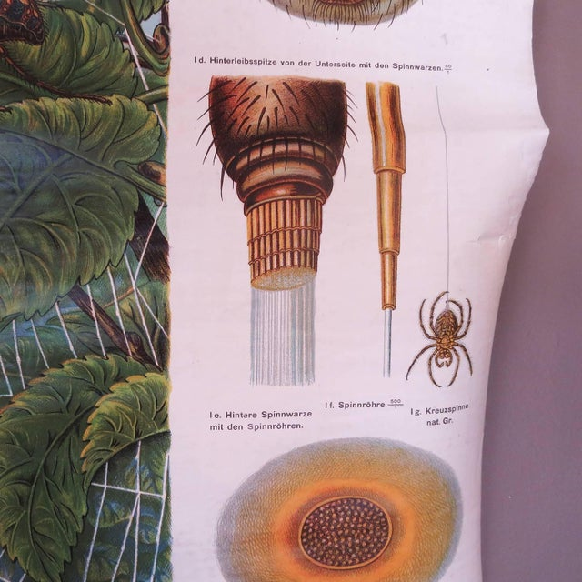 1910s German Biology Chart of Spiders by Schroder Und Kull, 1910 For Sale - Image 5 of 10