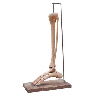 Primitive Carved Medical Model For Sale